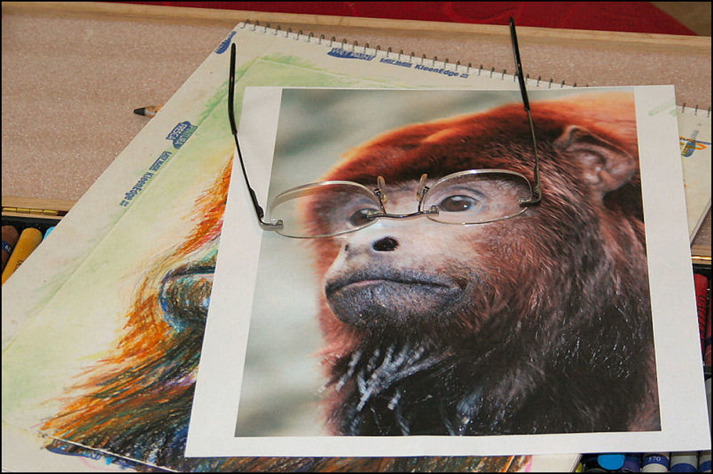 Drawing a male Howler monkey