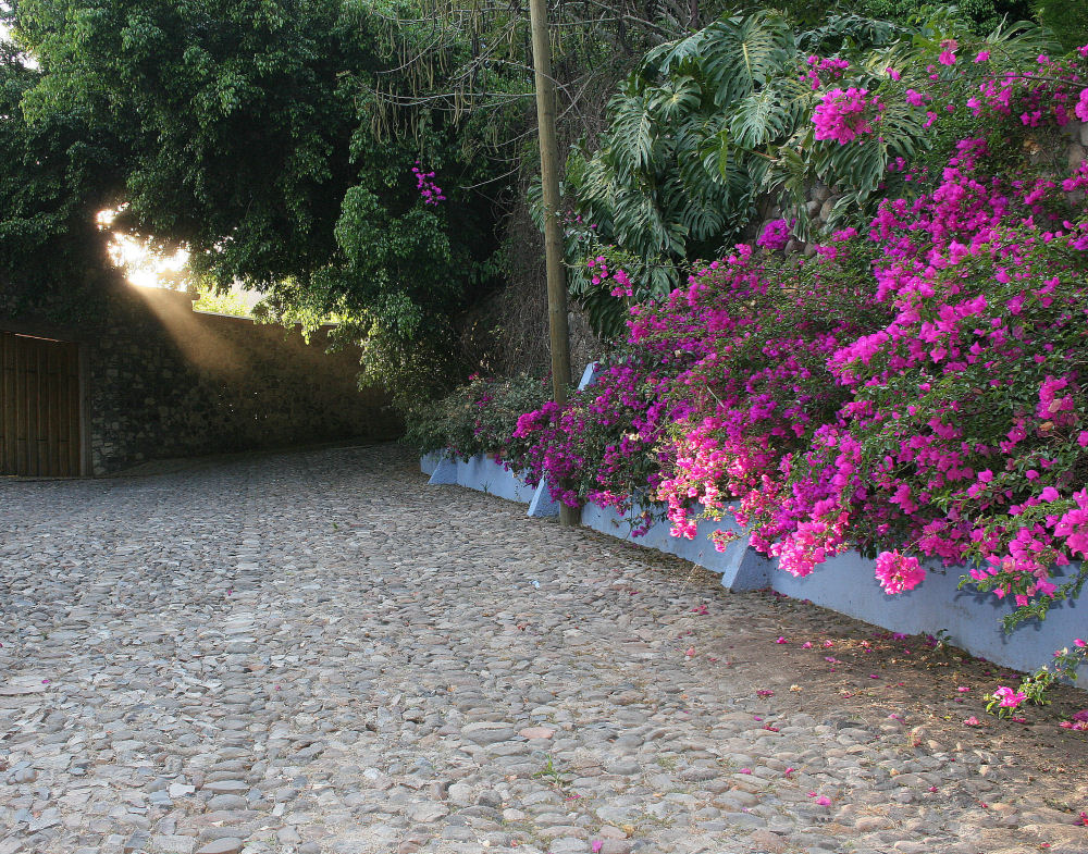 Evening rays and Bougainvillea, Chapala, Mexico