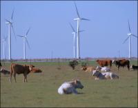 Wildorado Wind Ranch near Adrian, Texas