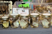 Fang-bearing snake heads in jars for $11 each