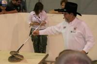 Rattlesnake wrangling