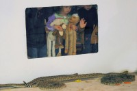 Children watch the snake wranglers