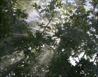 Sun shower