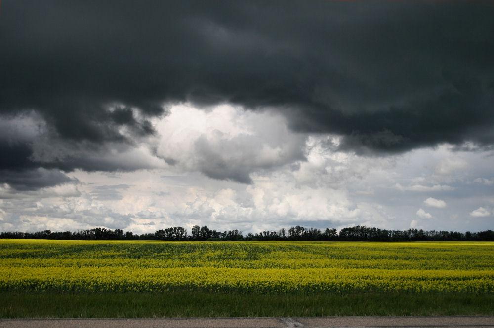Smoky Lake, Alberta, Canada and Canola field