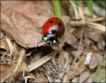 Welcome to my garden, little ladybug
