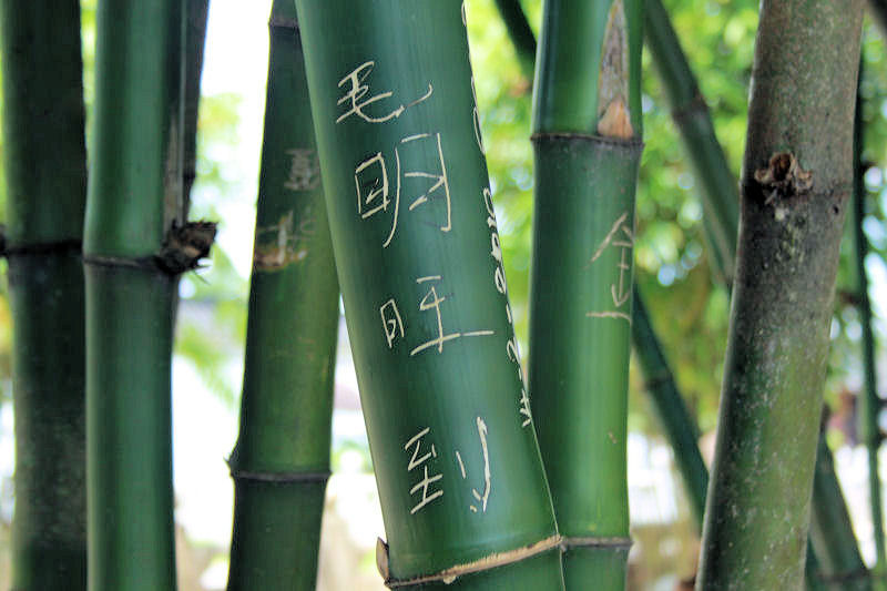 Bamboo at the Chinese Gardens, Singapore