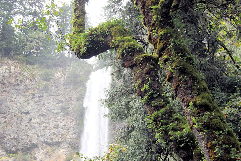 Mossy growth, Multnomah Falls, Oregon