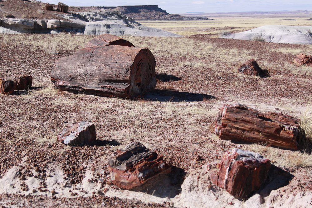The Crystal Forest petrified forest, Arizona
