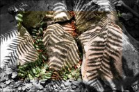 Tree Fern shadows, Chapala
