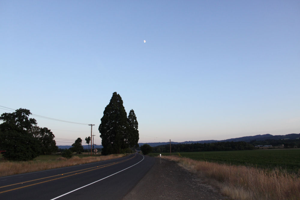Giant Redwood tree with large horizontal branch hanging over Hwy 219, Hillsboro, OR