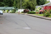 Deer eating new growth in neighborhood gardens