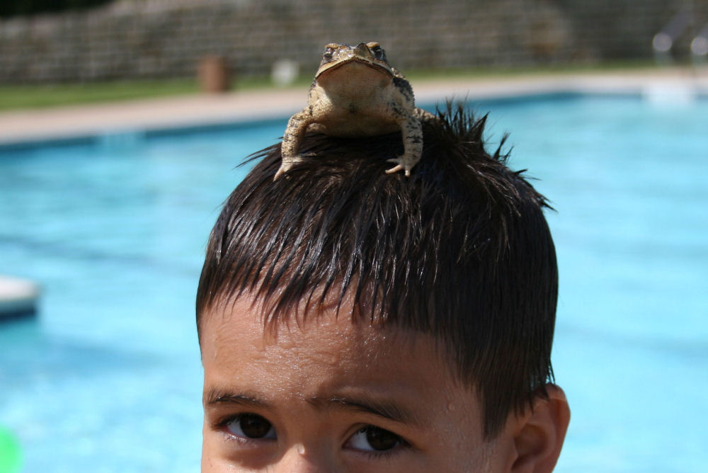 A boy at our local pool, saving a toad that had fallen in