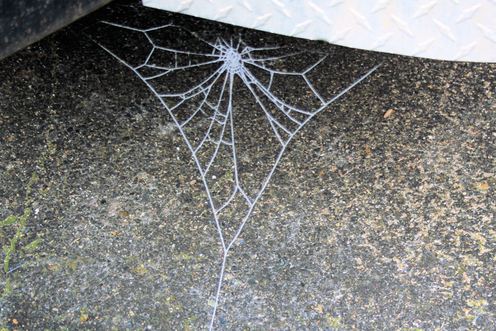 Frosty Web - trailer, driveway