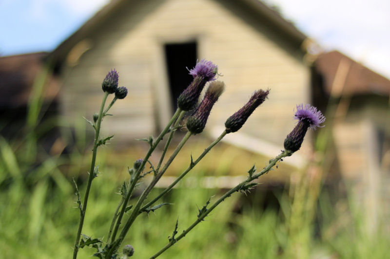 Thistle, old house near the Columbia River Gorge