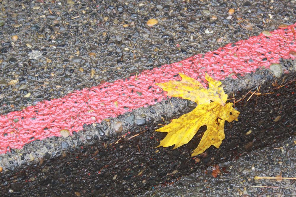 Bigleaf Maple leaf, Horseshoe Falls, OR