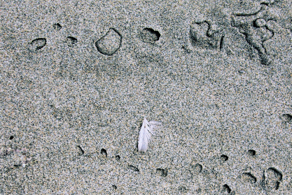 Sand textures and feather, Seaside beach, OR