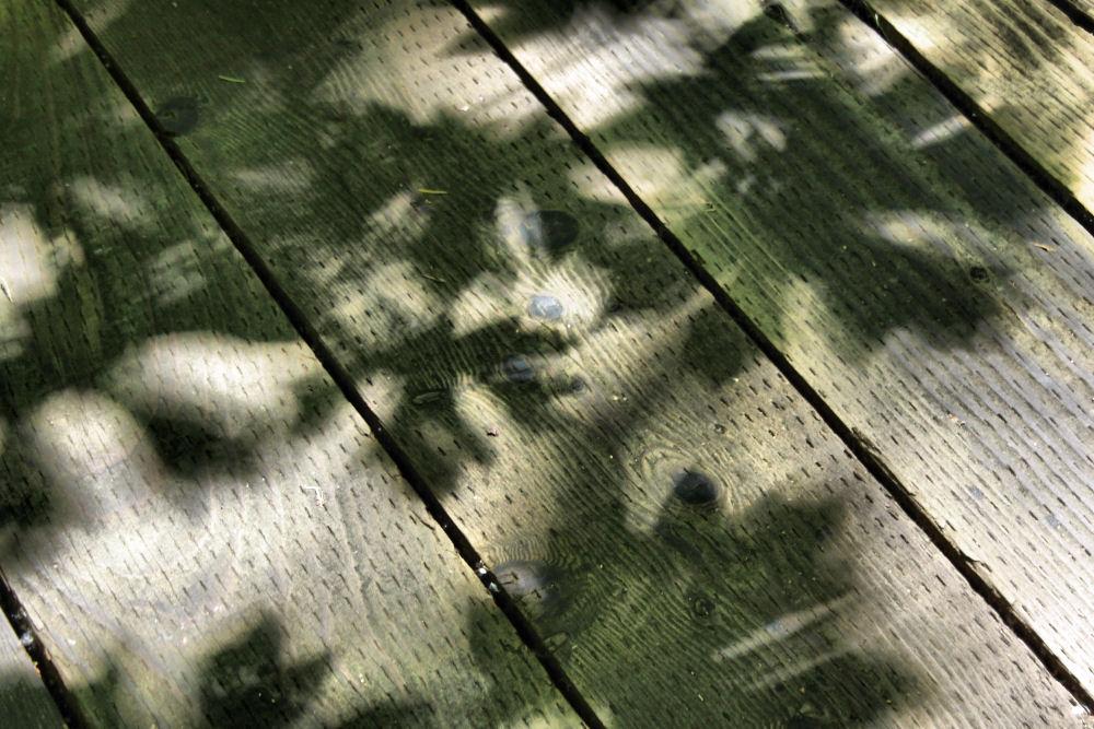 Tualatin Nature Park summer shadows