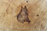 Sweetgum Log, rotting center produced these shapes
