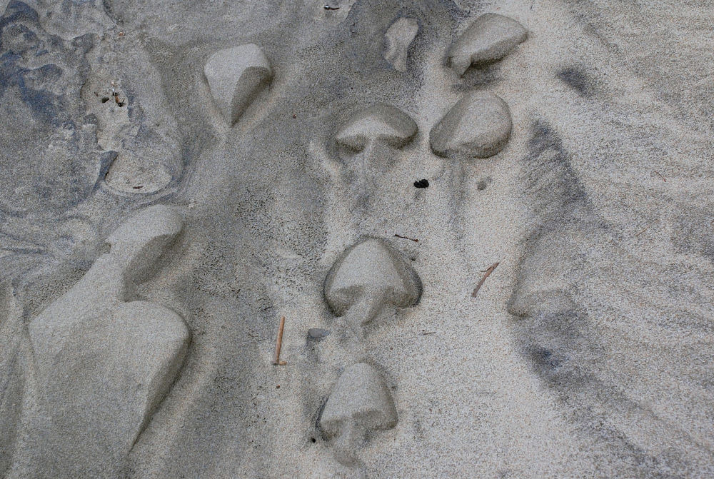 This Way - Netarts Bay, Oregon phenomena - wind and tides formed sand sculptures