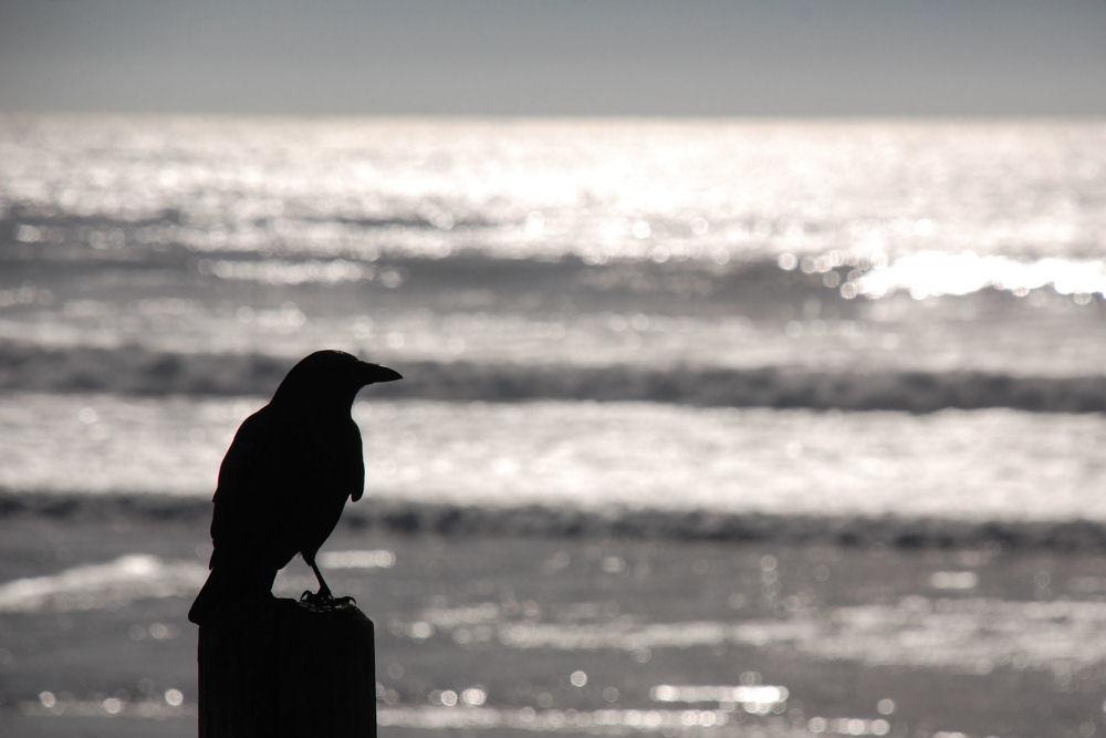 Happy Hallowe'en! Crow, Oceanside, OR