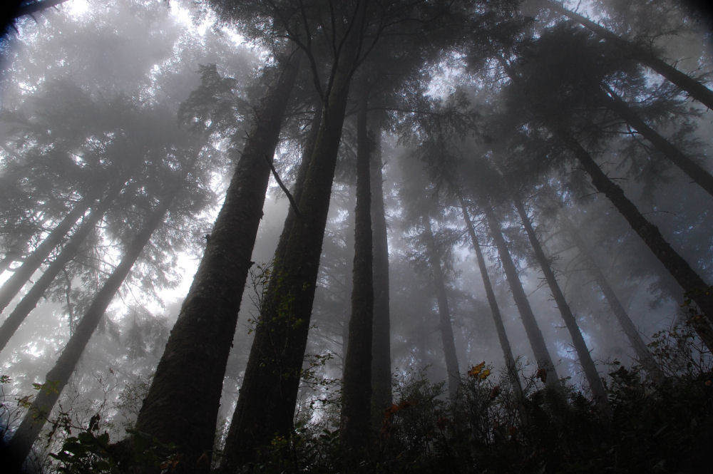 Foggy forest, Cape Lookout Trailhead, OR, USA