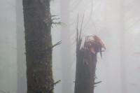 Thick fog, Cape Lookout Trailhead near Oceanside, Oregon