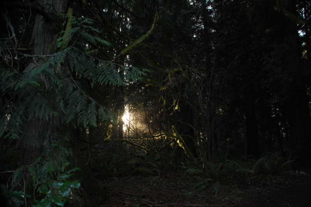 Low light situation, winter walk in Beaverton, OR