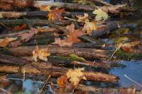 Rood Bridge Park pond interest, Hillsboro, OR