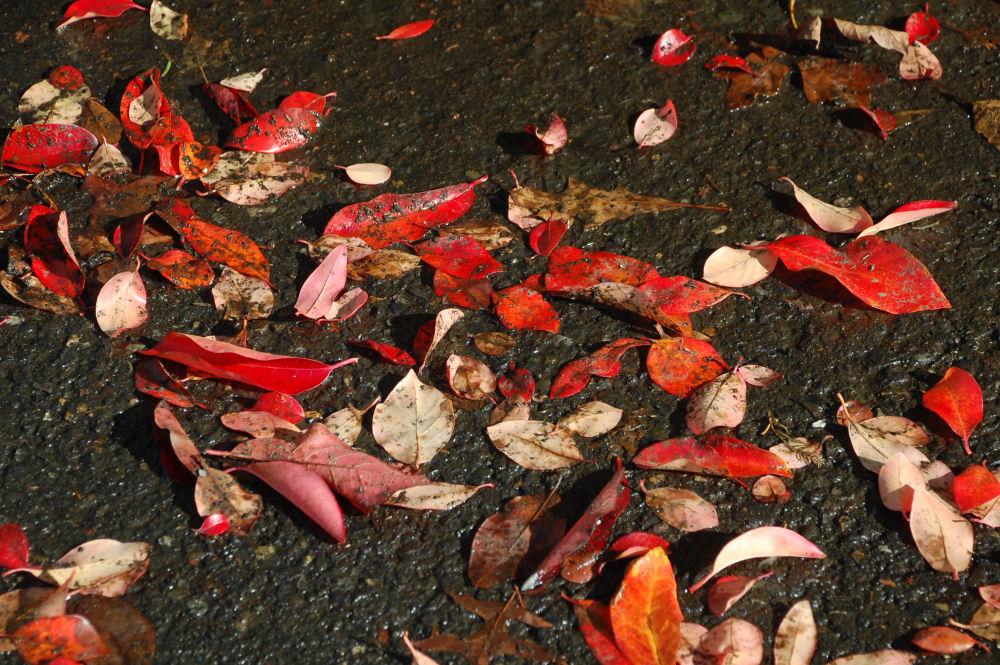 Intense color, Rood Bridge Park, Hillsboro OR