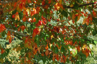 Intense colors, Rood Bridge Park, Hillsboro OR