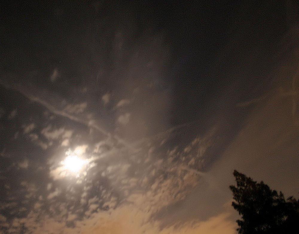 Moonshot, Cypress tree, Lewisville, TX