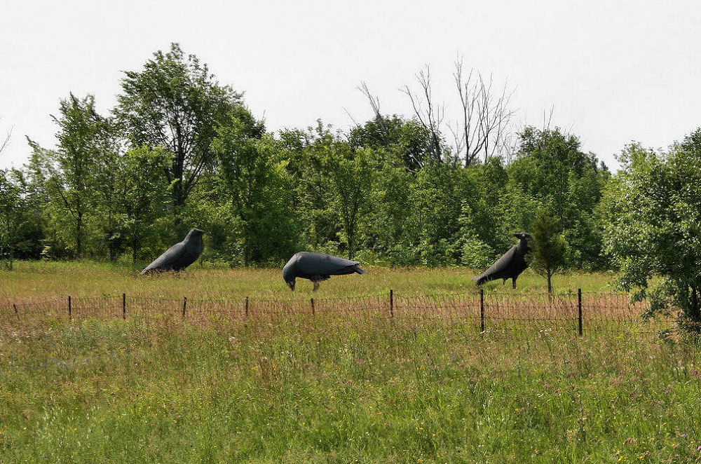 3 crows sculptures, just past the Canadian border  New York