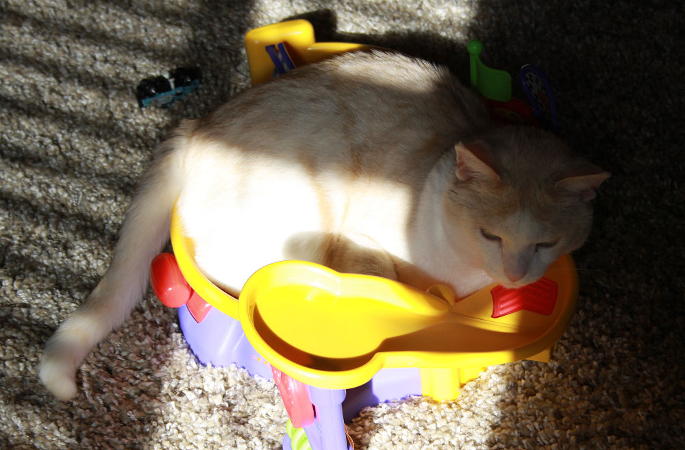 Catty lounging in one of Cameron's toys