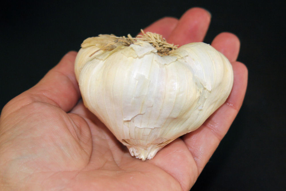 Heart shaped garlic