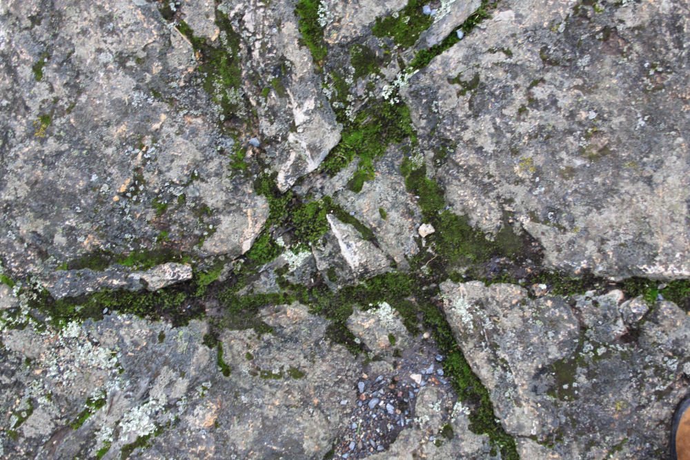 Rock and moss abstract, Mt. Douglas, Victoria, BC