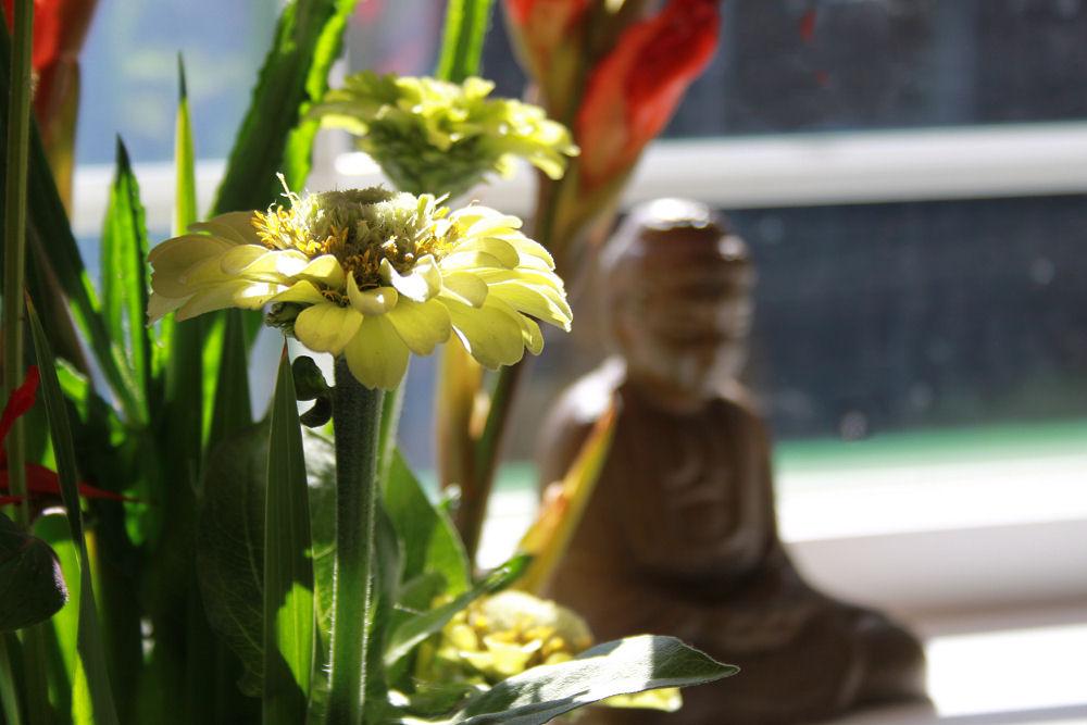 Zinnia Zen, Hillsboro kitchen bouquet