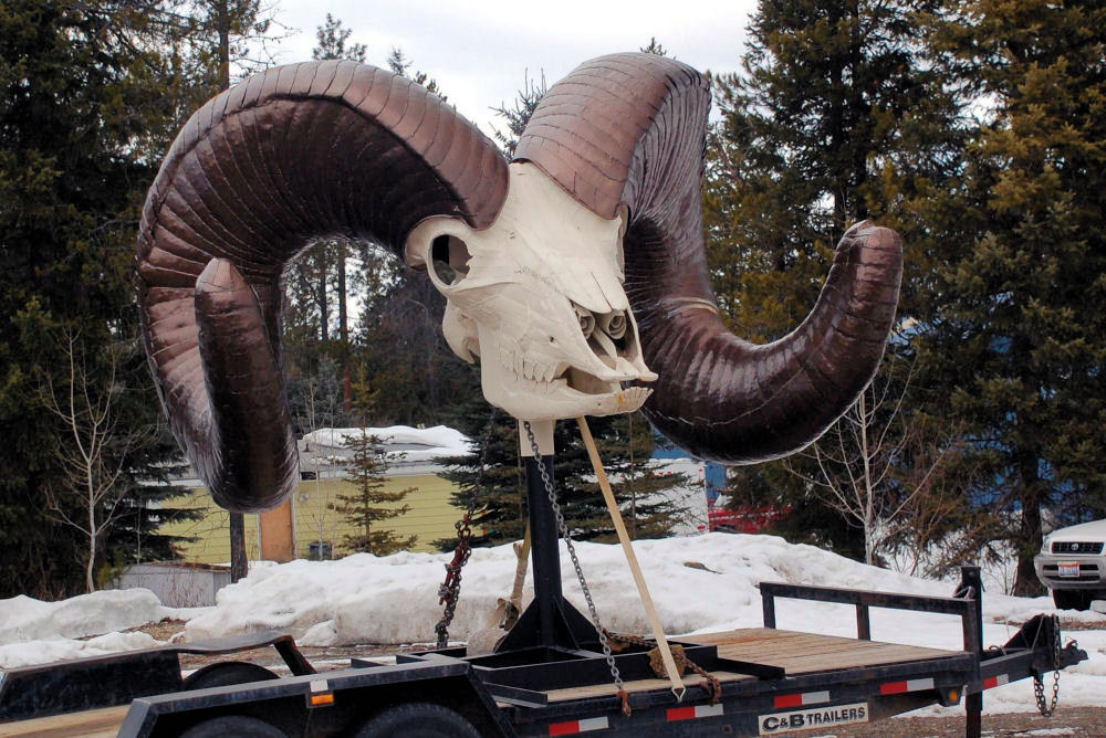Idaho Ram's head sculpture, parade float