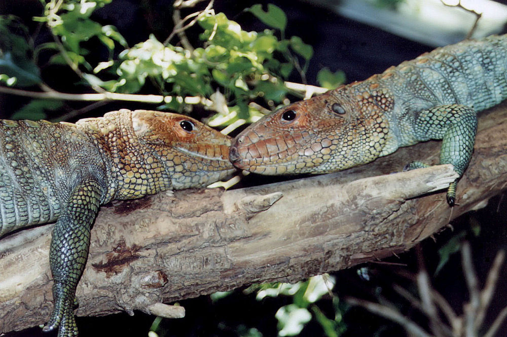 Lizards, Fort Worth Zoo