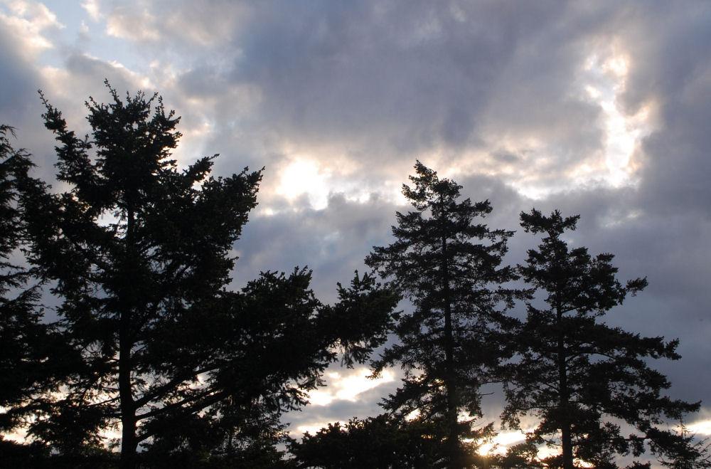 Silvery sunrise, North Saanich, BC