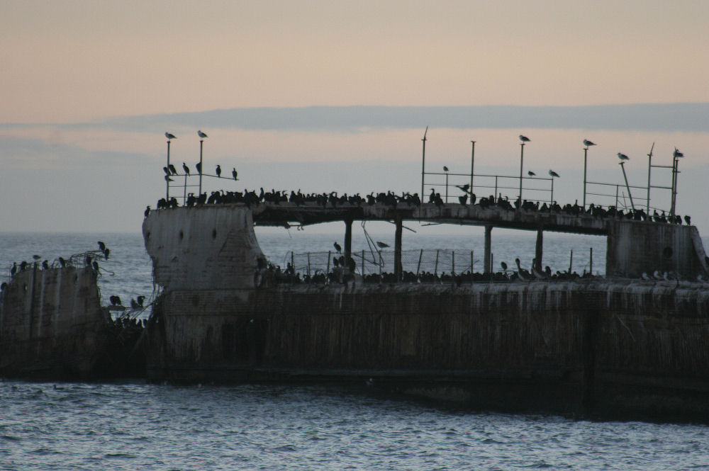 A colony of cormorants lives on SS Palo Alto, a concrete ship on Seacliff State Beach, CA