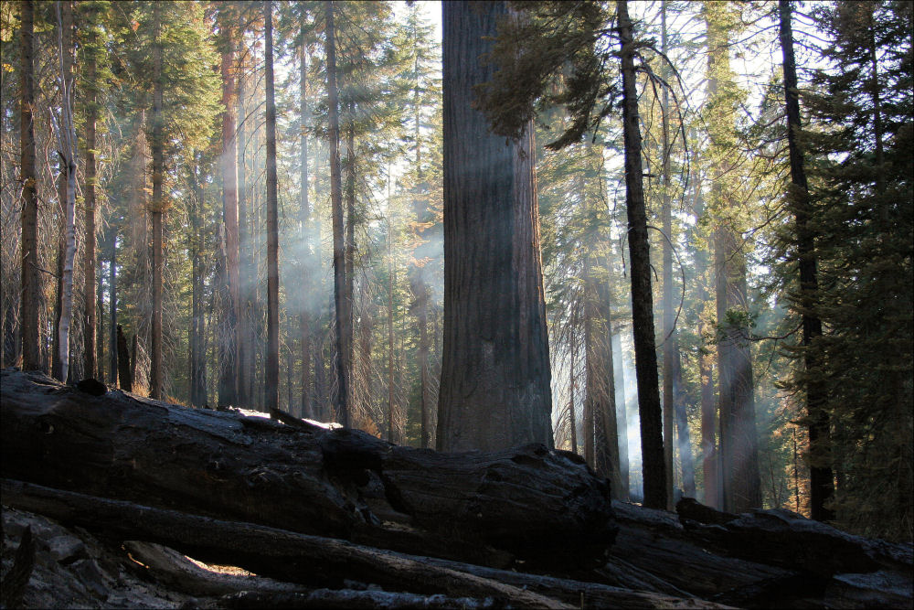 Still smoldering, Sequoia National Park, California