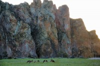 Deer grazing at Smith Rock State Park, Redmond, OR
