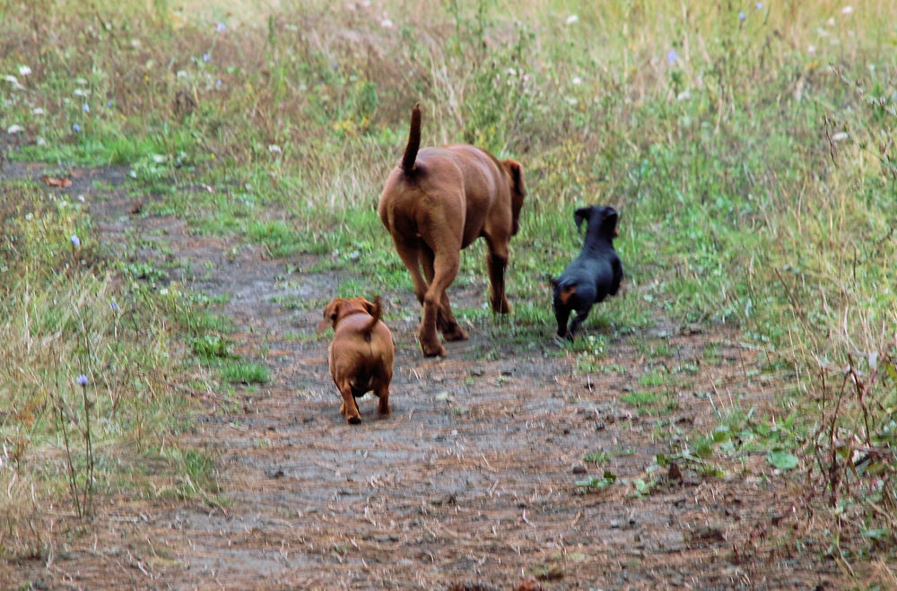 Best friends, farm near Gales Creek, OR