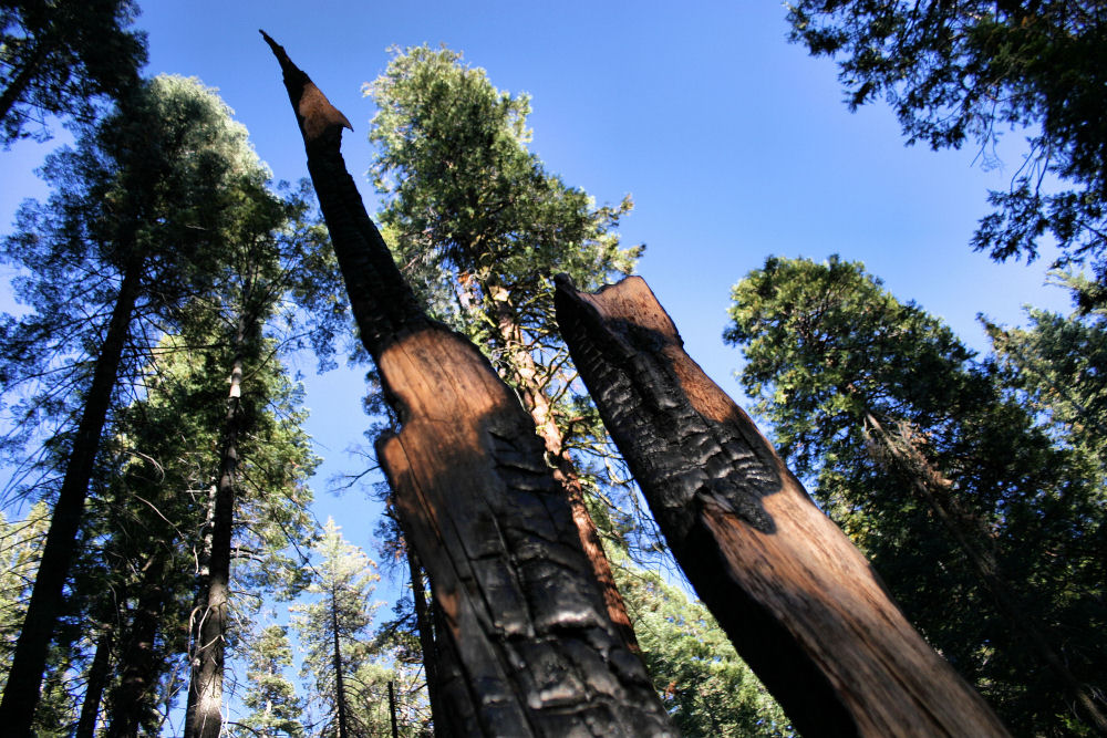 Sequoia National Park, burnt forest, CA