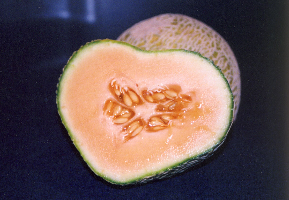 Heart shaped cantaloupe, Lewisville TX