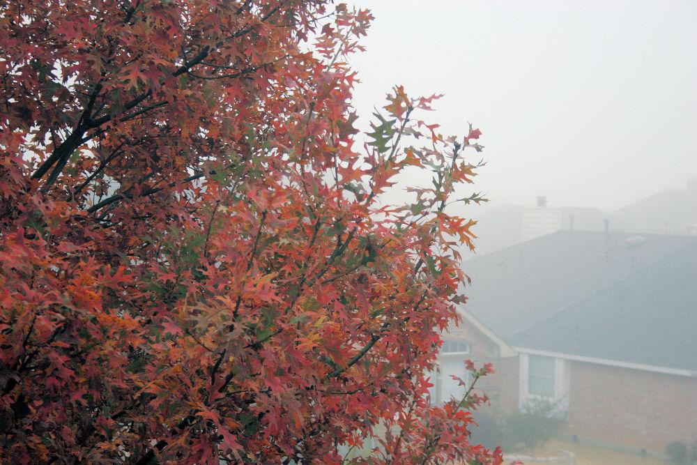 Our Oak and foggy neighborhood