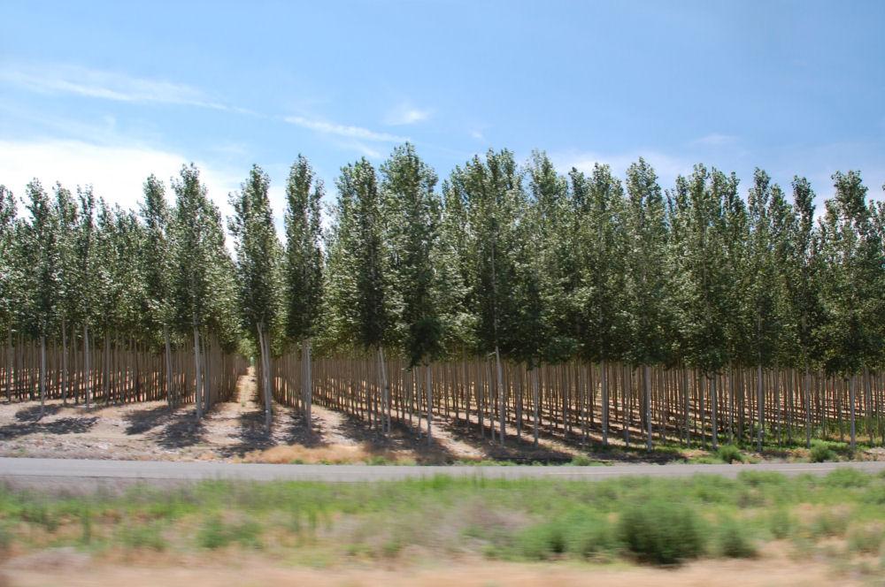Greenwood Tree Farm, Columbia Basin, Hwy 84, Oregon
