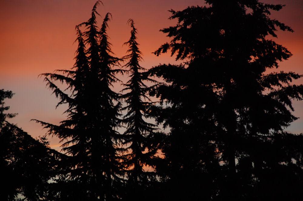 Sunset silhouettes, Hillsboro, OR