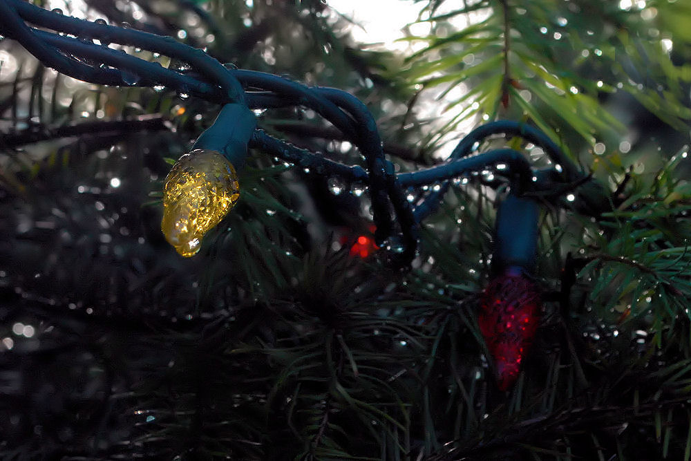A few brief moments of sunshine through rain drops on the Christmas lights, North Saanich, BC