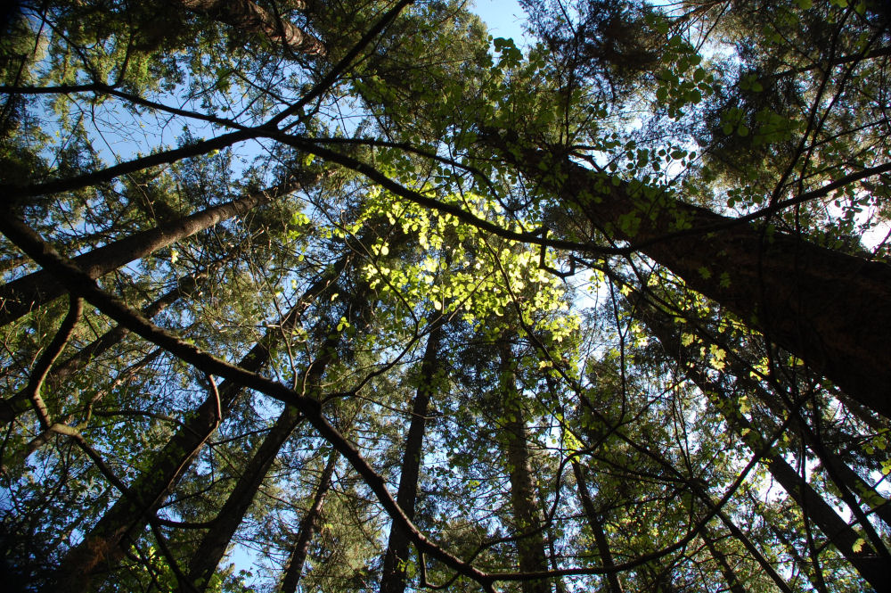 Spring forest, Tualatin Hills Nature Park, Besverton, OR